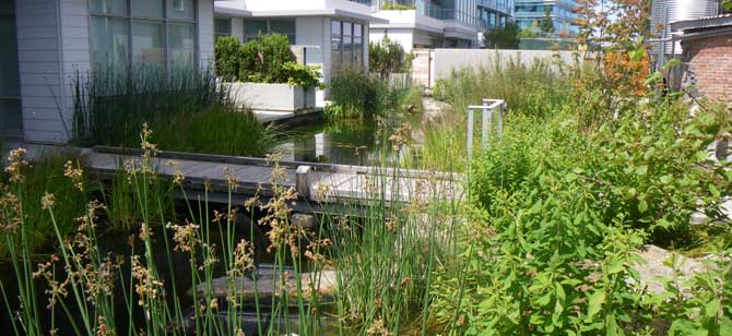 Combining wetland restoration with stormwater management | U.S. Green Building Council